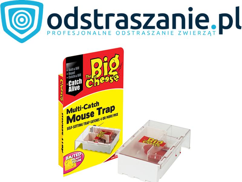 żywołapka na myszy