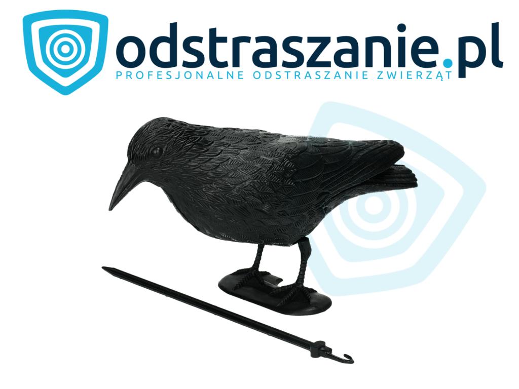 odstraszanie ptaków, makieta kruka, sposób na gołębie