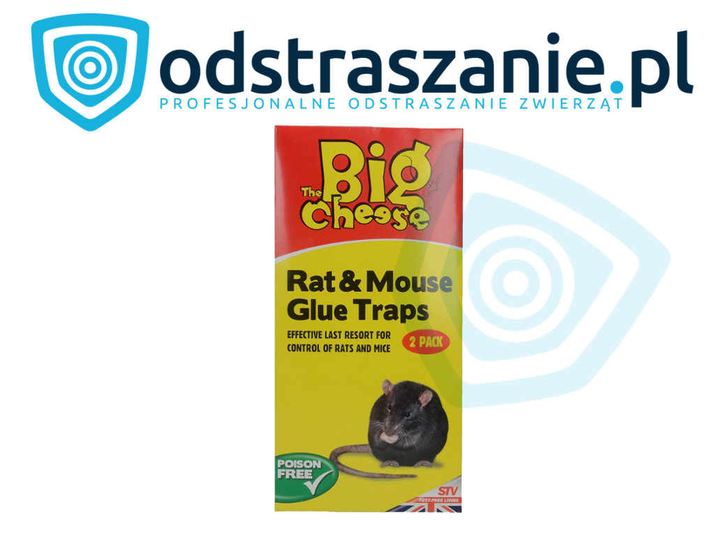 problem ze szczurami