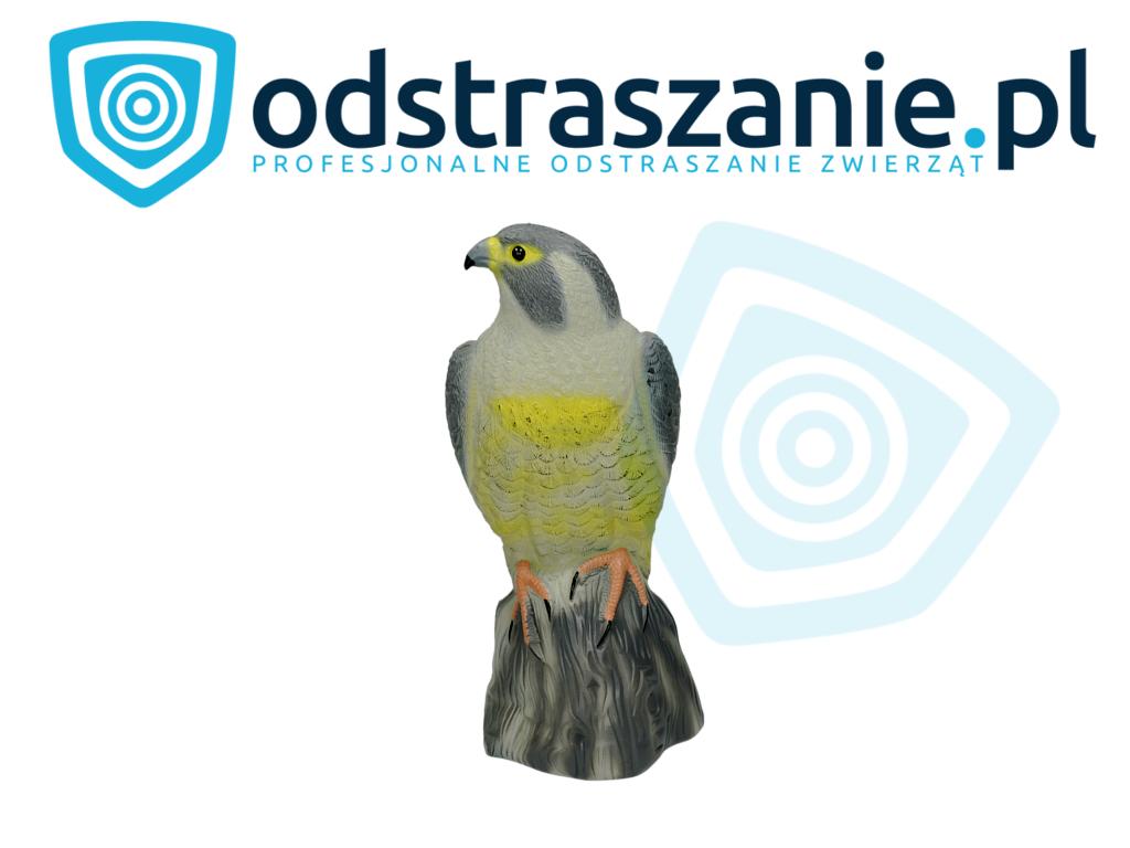 odstraszanie ptaków, makieta sowy, sposób na gołębie