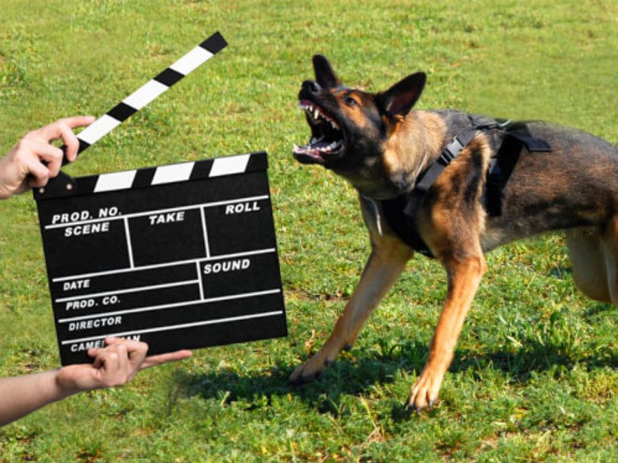 odstraszanie zwierząt film